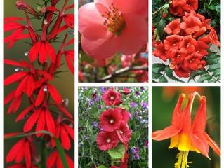 Plant Pollinators