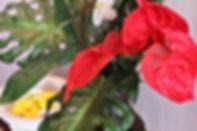 厚木 マッサージ,本厚木 マッサージ,厚木 タイ古式、厚木 セラピスト,マッサージ 厚木,本格派タイ古式|タイ古式マッサージAngeアンジェ|厚木市中町,