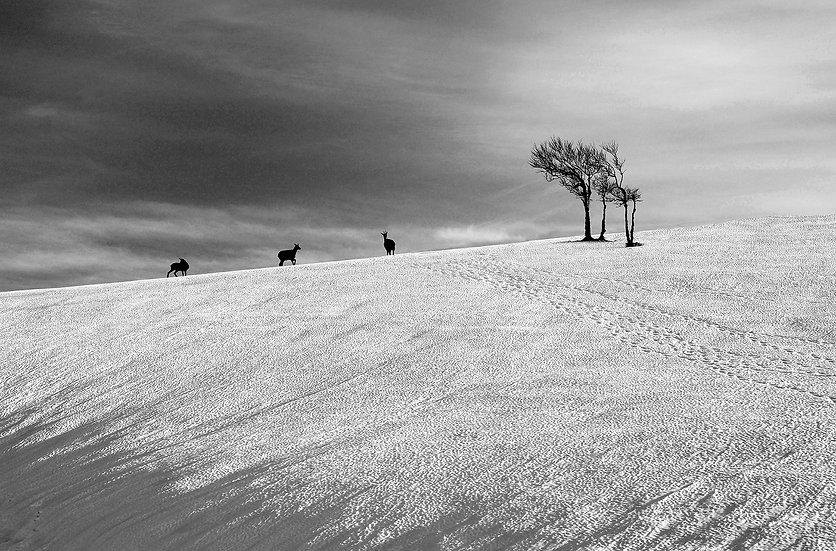 Amedée De Almeida . Nature d'hiver