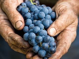 Professions & Formations viticoles