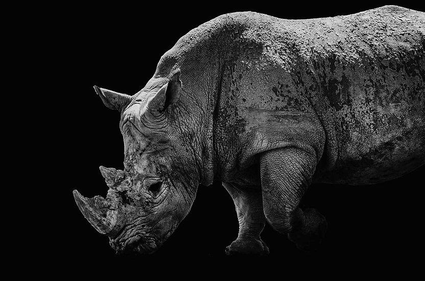 Christelle Debarnot . Rhinocéros