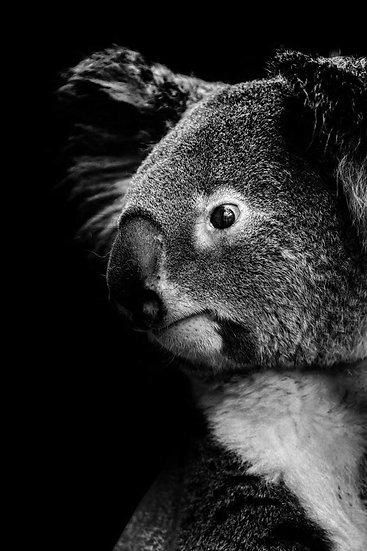 Christelle Debarnot . Koala
