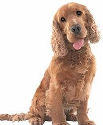 hond-medium.jpg