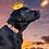 Thumbnail: Halsband hond - Oranje Holland