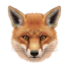 Fox Face_Transparent Background_Workfile