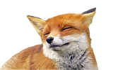 Fox_edited_edited_edited.png