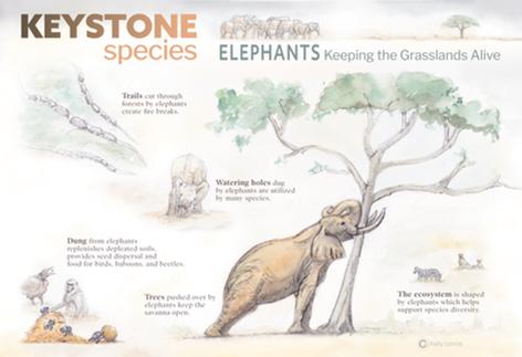 Elephants_Keystone_2020_KLance-01.png