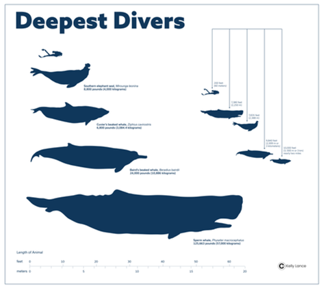 Deepest_Divers_KLance-01.png