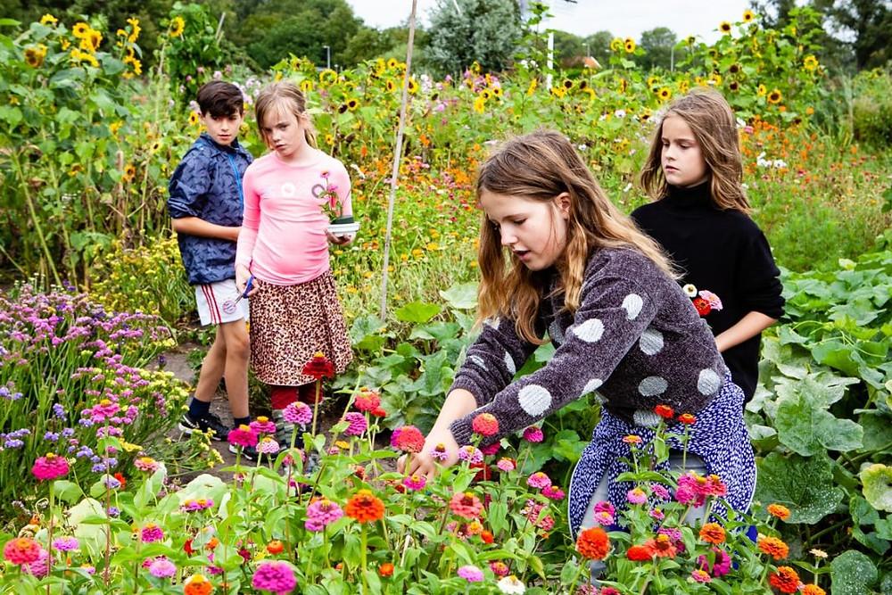 Een foto van vier kinderen die een tuin vol bloemen en andere gewassen aan het tuinieren zijn. De kinderen, drie meisjes en een jongen, staan tussen de bloemen. Een van de meisjes is bezig met het planten van een bloemetje.