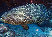 grouper carolina beach charter