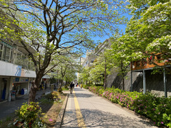 ZENJIRO HQ area in Spring