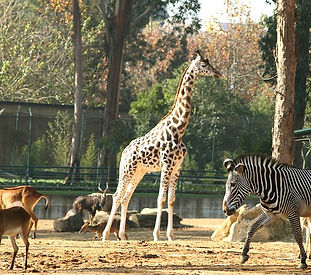 Zoo.santo.inacio-(21).jpg