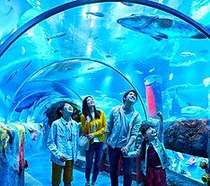 sea-life_edited.jpg