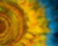 sunflower_final.png