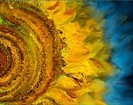 sunflower_final.png