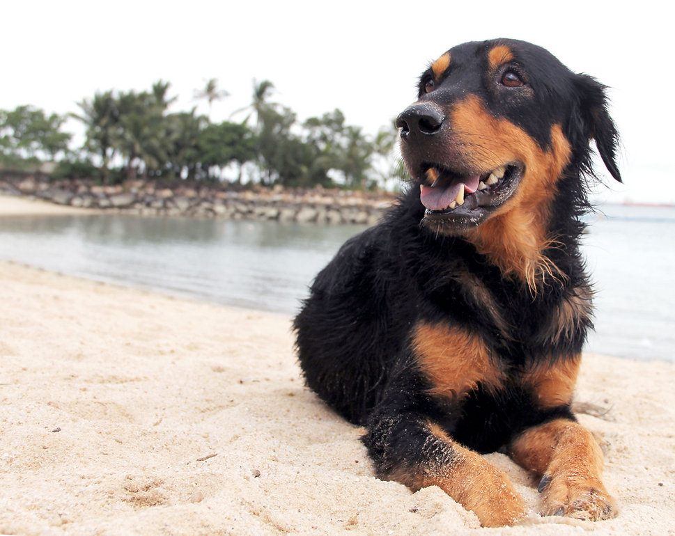 Adopt A Dog - Mercylight Singapore