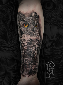 Owl Sean Evert