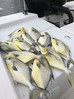 Pompano fishing in the St Lucie remains strong