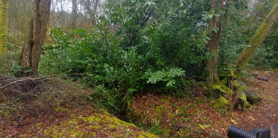 Dartmoor Jungle