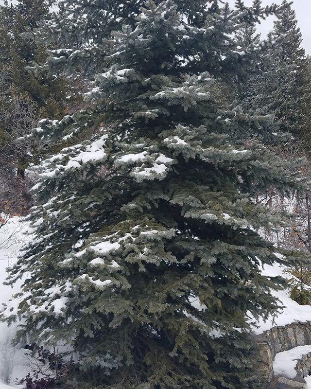 I see a christmas tree.jpg
