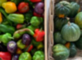 pepperssquash.jpg