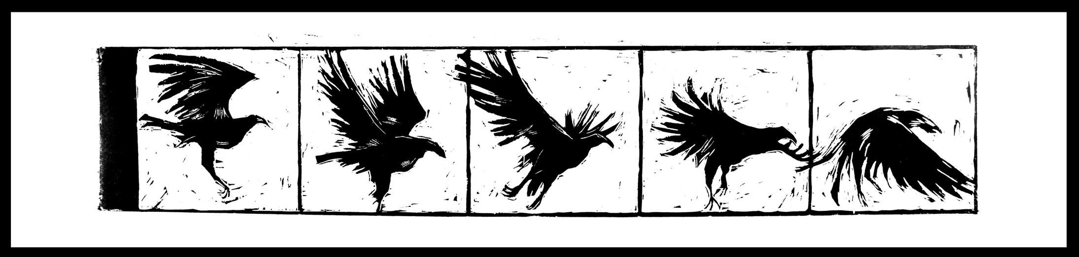CollapseBirds.jpg