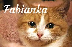 Fabianka titulka.jpg