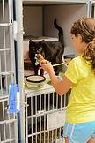 Girl-feeding-cat-at-shelter-300x450(3).j