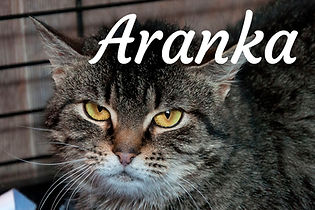 Aranka.jpg