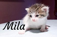 Mila.jpg