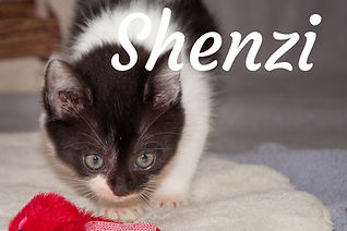 Shenzi.jpg