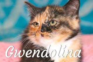 Gwendolína.jpg