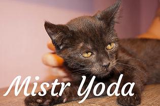 Mistr Yoda.jpg