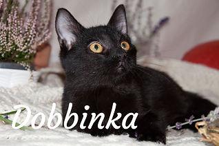 Dobbinka_titulka.jpg