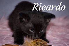 Ricardo titulka 2.jpg
