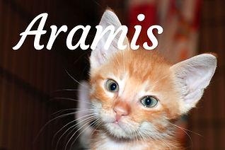 Aramis.jpg