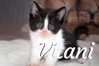 Vitani.jpg