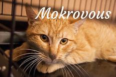 Mokrovous.jpg