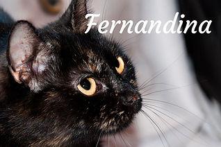 Fernandina.jpg