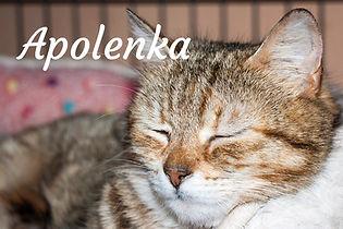 Apolenka.jpg