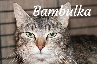 Bambulka.jpg
