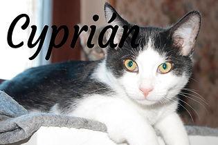 Cyprián.jpg