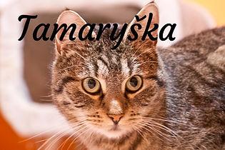 Tamaryška.jpg