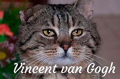 Vincent titulka.jpg