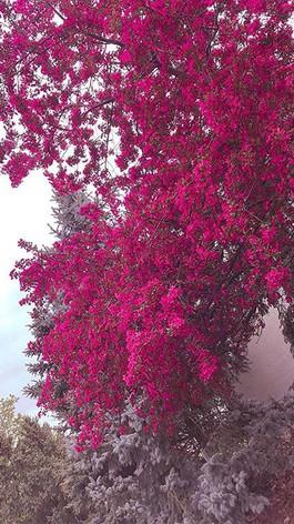 #iphonecamera  #spring.jpg