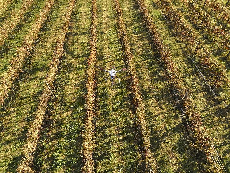 Drone su vigneto.JPG