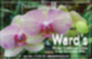 Wards-bizCard- Nonprofit center ad17.jpg