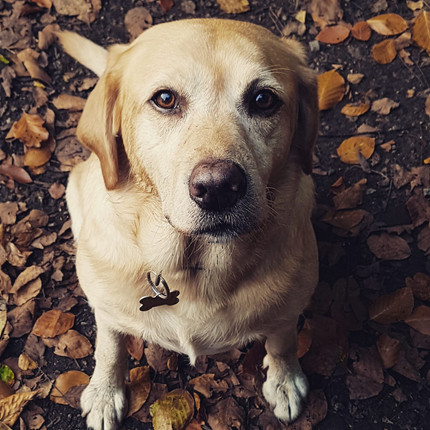 Sheffield Dog Walk