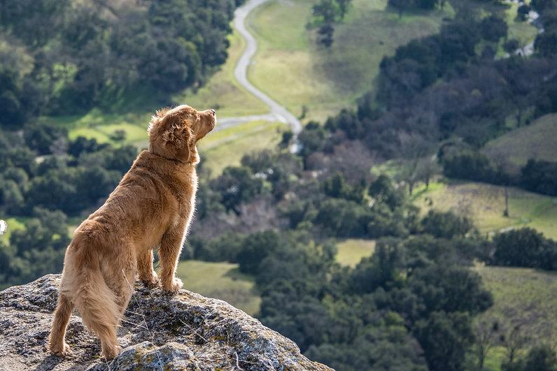 Adventure Dog Walks Sheffield