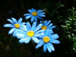 Flowers Esterel